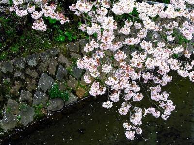 Японский пейзаж-44