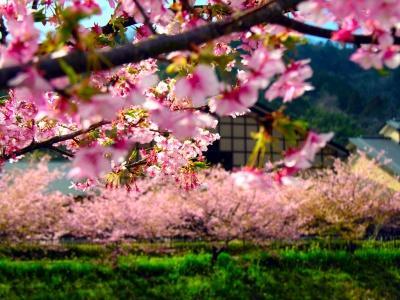 Японский пейзаж-48