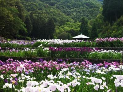 Японский пейзаж-24