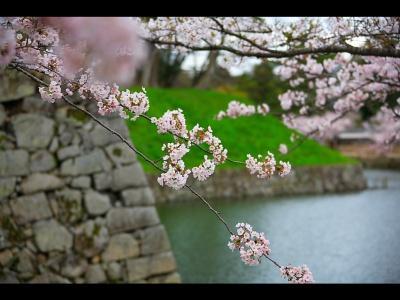 Японский пейзаж-17