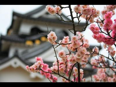 Японский пейзаж-7